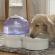 Первый в мире водородный диспенсор для животных